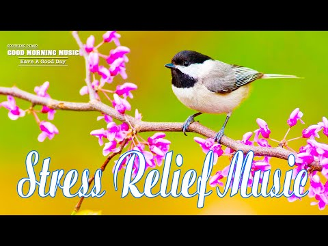 Classical Music For Relaxation 🌿 Fresh Positive Energy – Morning Meditation Music For Waking Up
