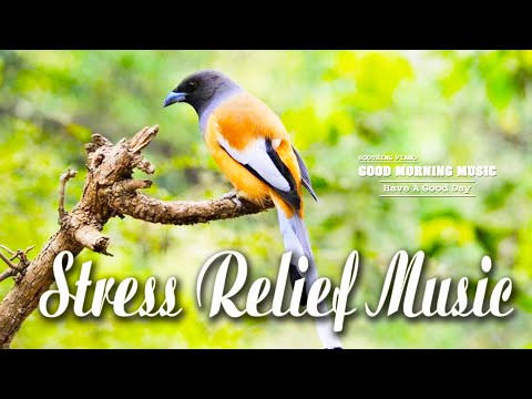 Classical Music For Relaxation 🌿 Positive Energy Relaxing Meditation Music, Study Music, Spa Music