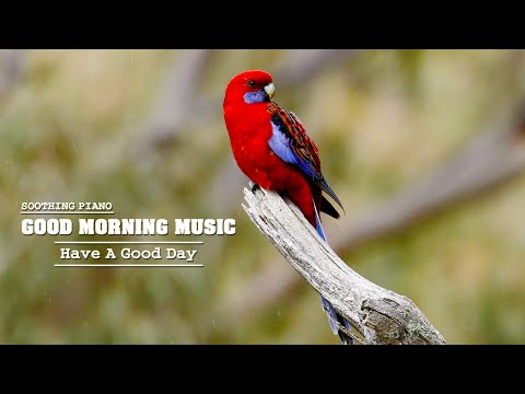 Good Morning Music 🌿Classical Music For Relaxtation , Peaceful Healing Meditation Music, Study Music