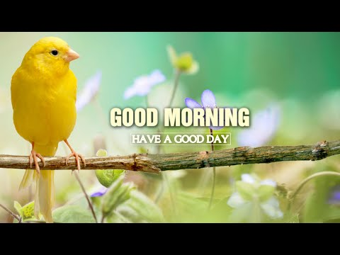 Good Morning Music – Peaceful Piano Music – Classical Music For Relaxation, Stress Relief Music